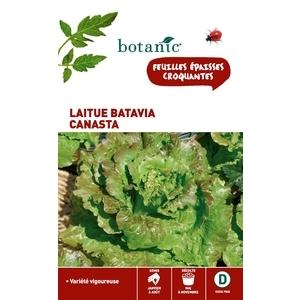 Laitue Batavia Canasta Caillard 261180