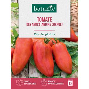 Tomate des andes (andine cornue) Caillard 261265