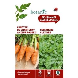Carotte de chantenay a coeur rouge 2 + coriandre cultivee Duo compagne 261292