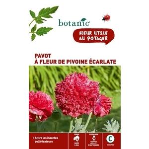 Pavot à fleur de pivoine écarlate en sachet 261335