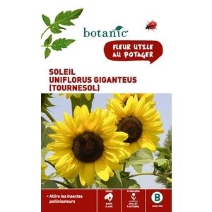 Soleil Uniflorus giganteus ou Tournesol x 2 sachets 261338