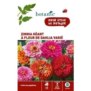 Zinnia géant à fleur de dahlia varié x 2 sachets 261340