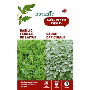 Basilic feuille de laitue  +  sauge officinale Duo aromatique 261349