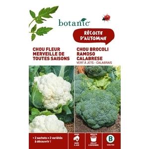 Chou fleur merveille de toutes saisons  +  chou brocoli ramo Duo potagere 261352