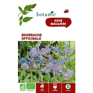 Bourrache officinale BIO 261367