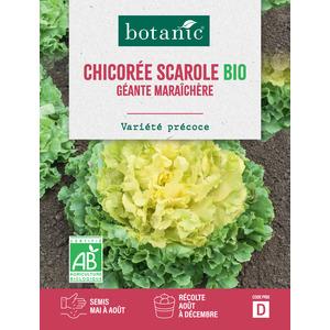 Chicorée Scarole Géante Maraîchère AB BIO 261374