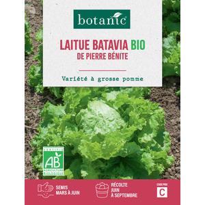 Laitue Batavia de Pierre Bénite AB BIO 261393
