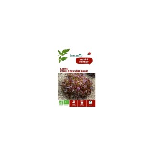 Laitue Feuille de Chêne Rouge AB BIO 261398