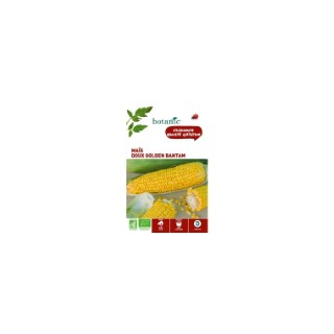 Maïs Doux Golden Bantam AB BIO 261409