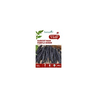Haricot Nain Purple Queen Mangetout 200 gr 261463
