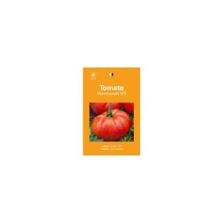Tomate marmande 261541