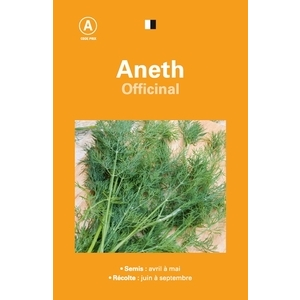 Aneth officinal 261543