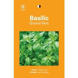 Basilic grand vert 261545