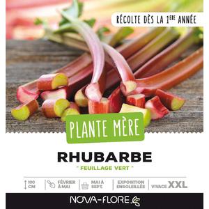 Rhubarbe en vrac dans caisse en bois 261663
