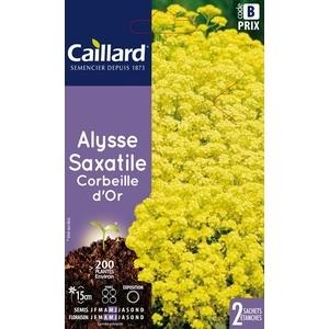 Alysse saxatile corbeille d'or en sachet 263056