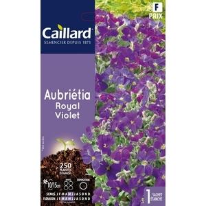 Aubrieta royale violette en sachet 263061