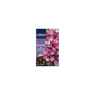 Eschscholzia de Californie simple rose en sachet 263098