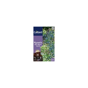 Myosotis des Alpes varié en sachet 263133
