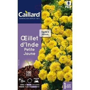 Œillet d'Inde petite jaune en sachet 263145