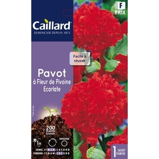 Pavot à fleur de pivoine écarlate en sachet 263155