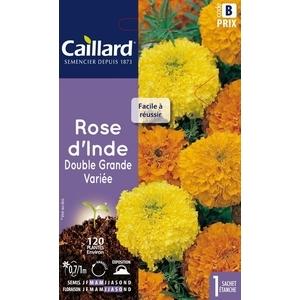 Rose d'Inde double grande variée en sachet 263187