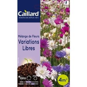 Mélange de fleurs variations libres en sachet 263213