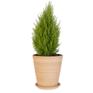 Pot Vaso lisse en terre cuite claire - D22x H22 263765