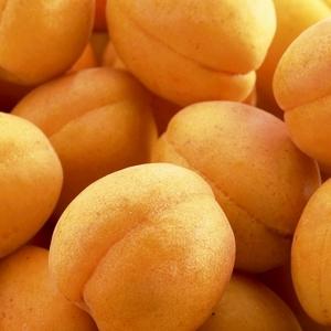 Abricotier Rustique Des Pyrenees ®Bourqui forme gobelet 273620