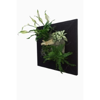 poche plant e kyoto pour cadre v g tal 4 plantes plantes. Black Bedroom Furniture Sets. Home Design Ideas