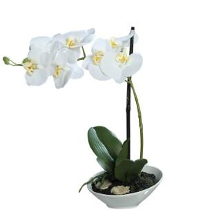 Orchidée Phalaenopsis en coupe Crème 279570