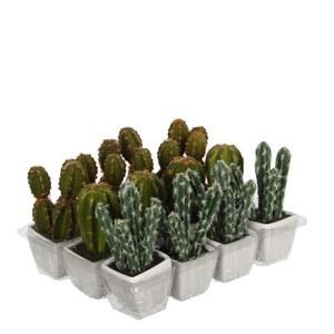 Cactus vert plante artificielle en pot H 14 x Ø 7 cm 280454