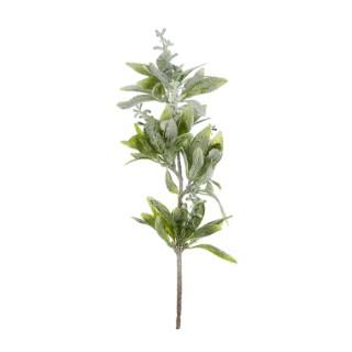 Sauge branche glacée vert 287982