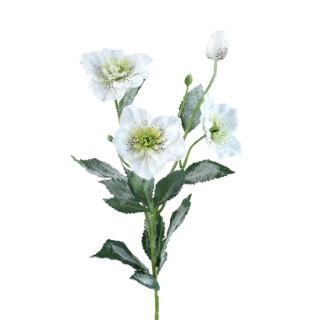 Hellébore glacé blanc H 60 cm 288390