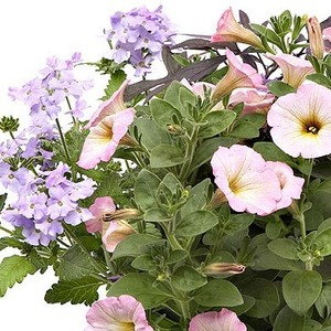 Melange Confetti Romantique. La jardinière de 50 cm 291321