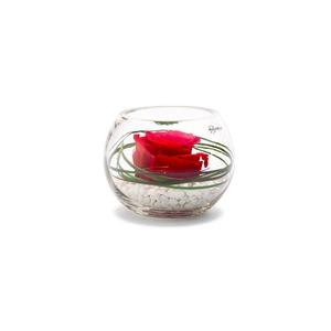 Verrine venezia rouge Ø 11 cm 292507