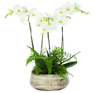 Composition florale 294241