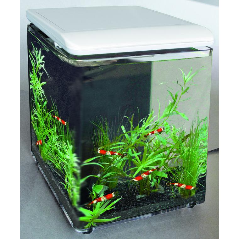 Home 8 Aquarium Blanc 8 L avec Pompe 200 Acrylique 20x20x23,2 cm 209453
