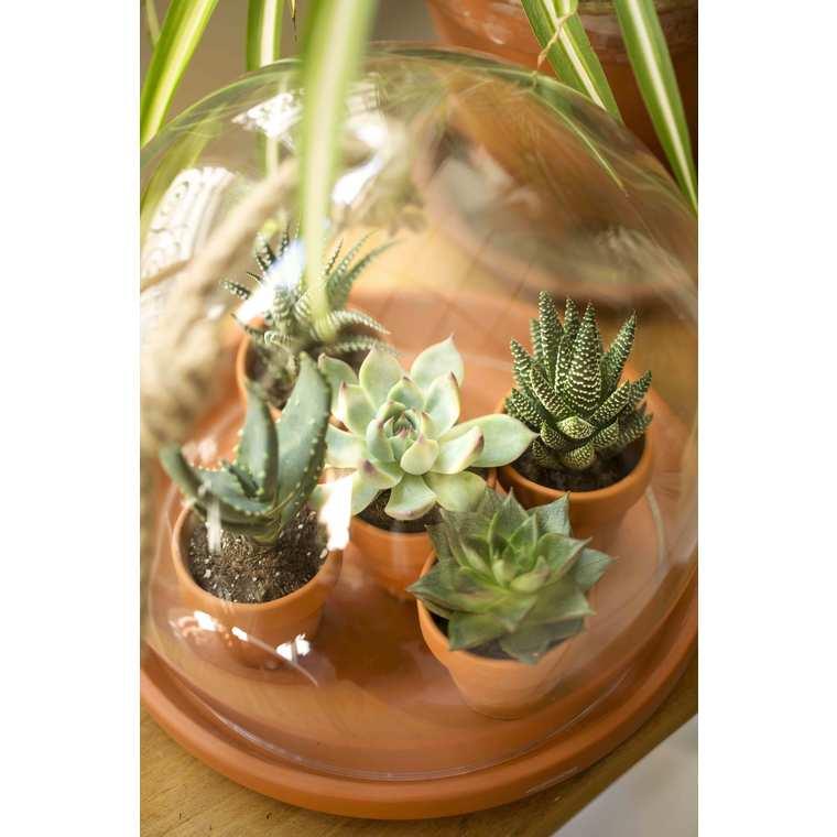 substrat cact es et plantes grasses 5 l terreaux plantes. Black Bedroom Furniture Sets. Home Design Ideas