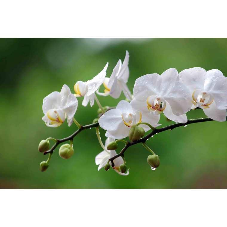Terreau orchidées 5 L 227055