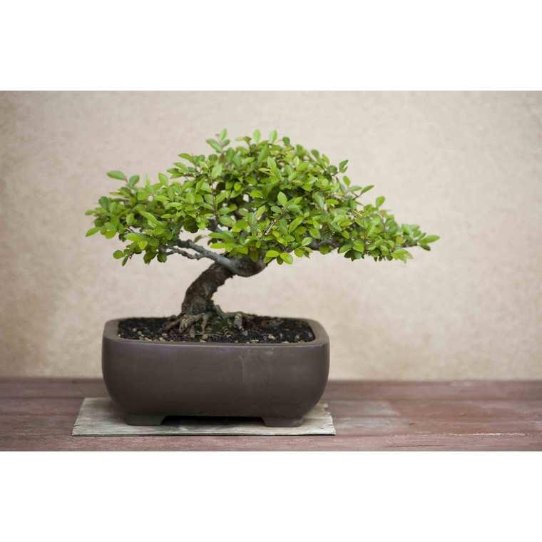 Substrat bonsaï d'intérieur 5 L