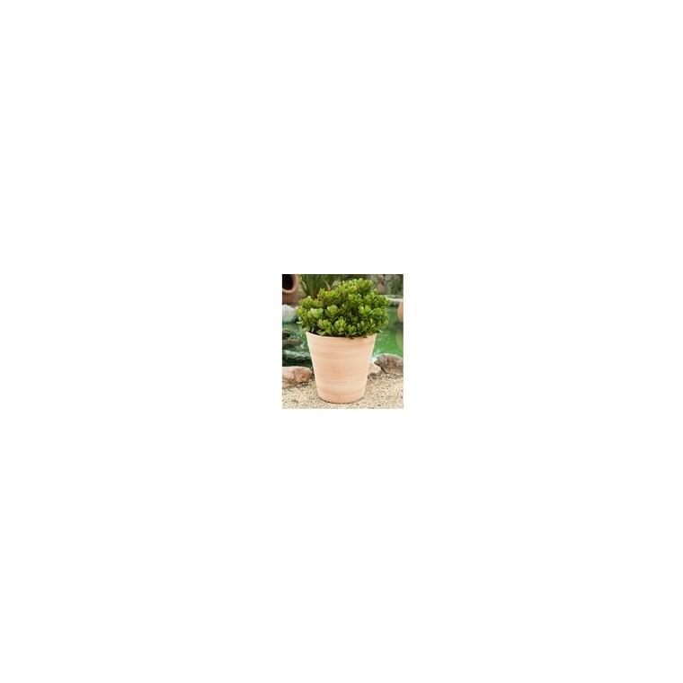 Pot Vaso lisse D40x H40 227976