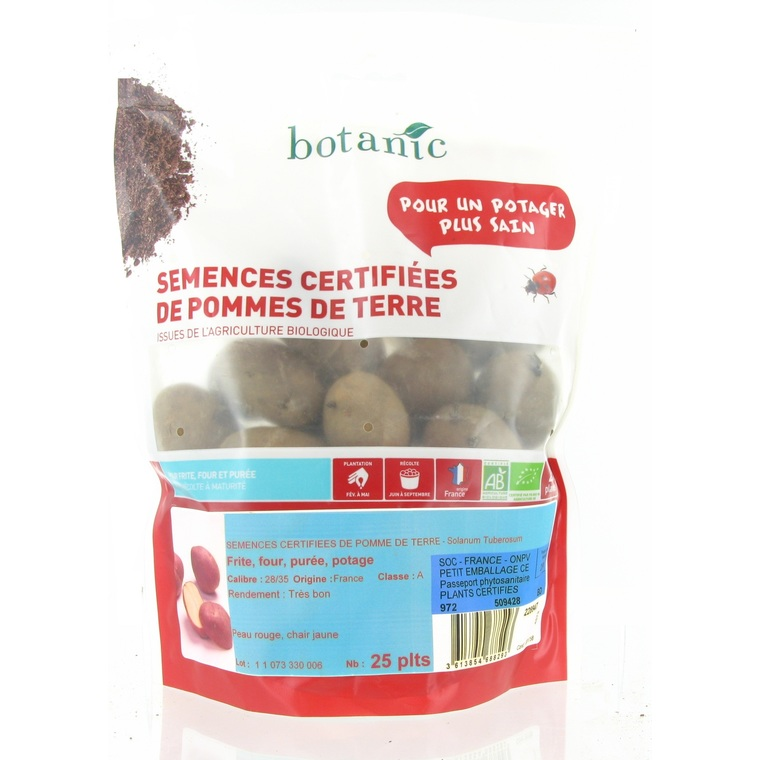 Pommes de terre Samba bio calibre 0001, 25 plants 228950