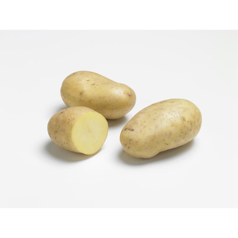 Pommes de terre Ditta bio calibre 0001, 10 plants 228971