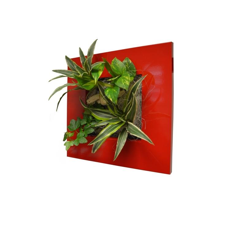 Cadre végétal S rouge 31x31 cm avec 4 plantes