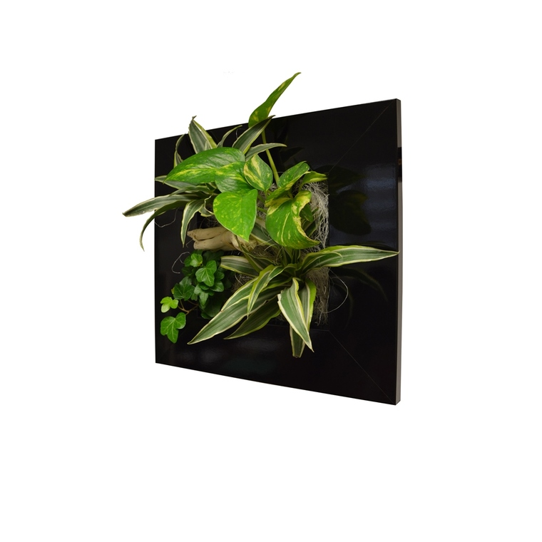 cadre v g tal s noir 31x31 cm avec 4 plantes plantes et. Black Bedroom Furniture Sets. Home Design Ideas