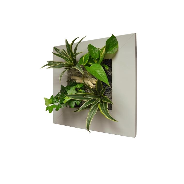 Cadre végétal S blanc 31x31 cm avec 4 plantes