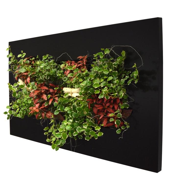 Cadre végétal M noir avec 8 plantes 31x58x15 cm