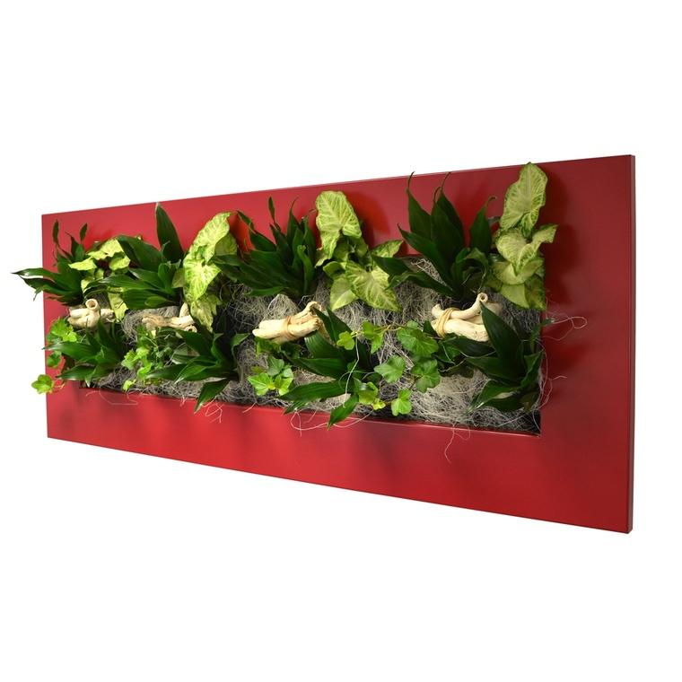 Cadre végétal L rouge avec 16 plantes 31x92x15 cm