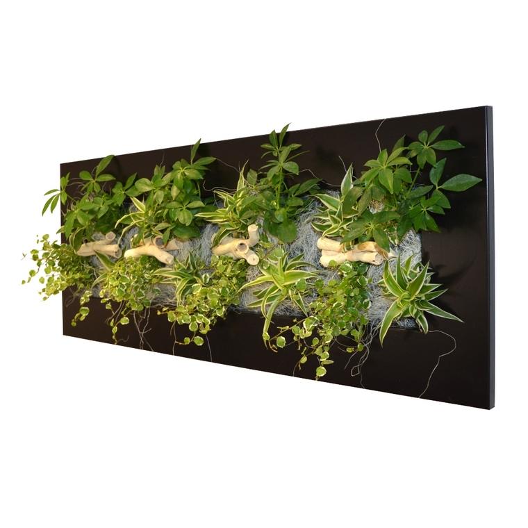 Cadre végétal L noir avec 16 plantes 31x92x15 cm