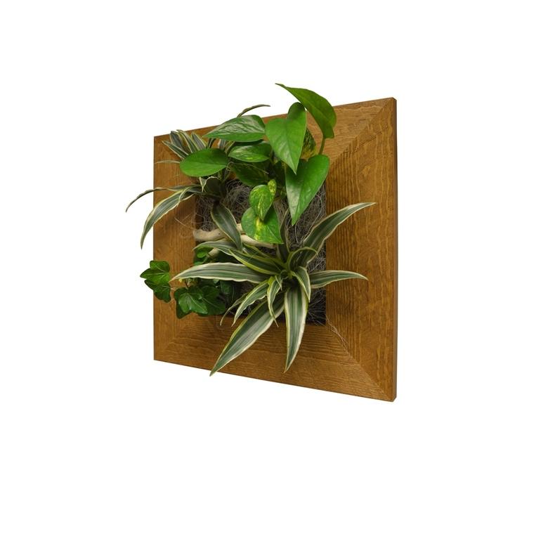 Cadre végétal S vieux bois 31x31 cm avec 4 plantes